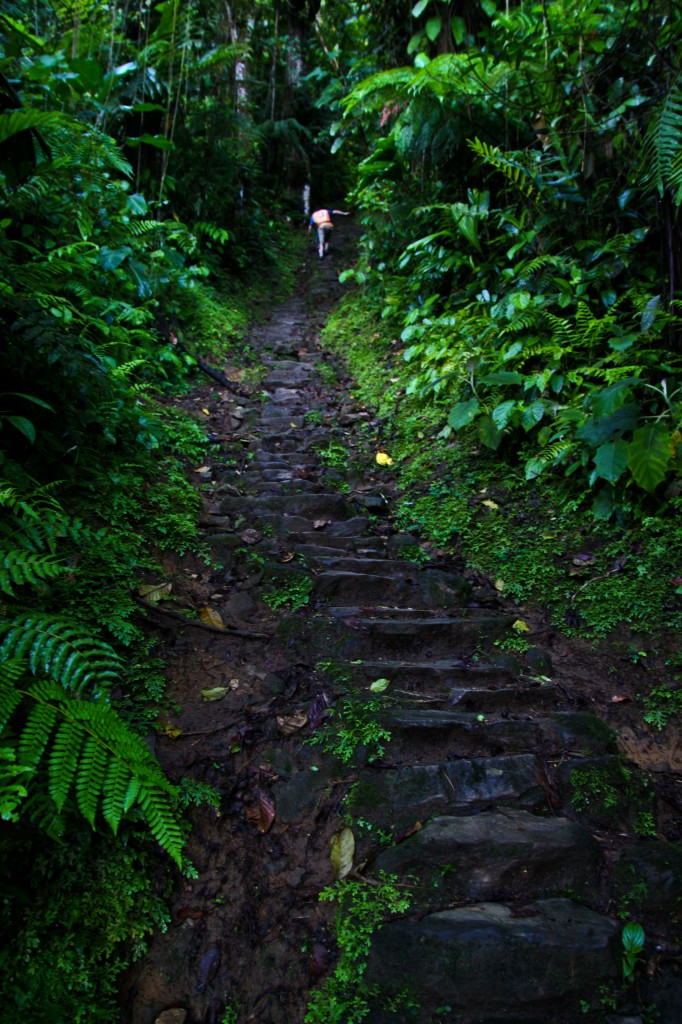 Half-way up the 1200 or so steps you have to climb to arrive at la Cuidad Perdida in Colombia