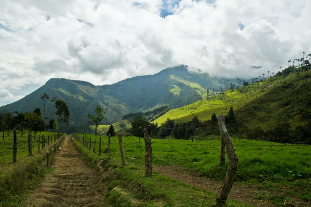 Hiking through el valle de cocora just outside of Salento, Colombia