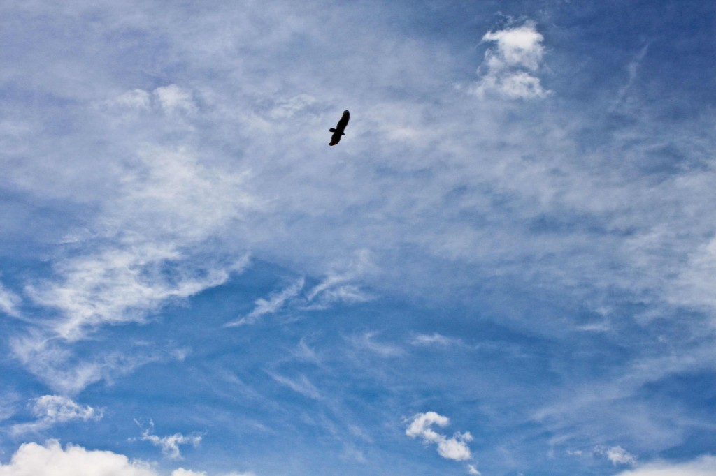 Free as a bird in flight - Floating high in the Cañon