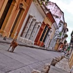 Latin America Travel Photography by Jamie Killen: Street scenes, Perros Callejeros Cartagena, Colombia