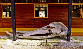 Latin America Travel Photography by Jamie Killen: Humback Whale Skull Isla de Gorgona
